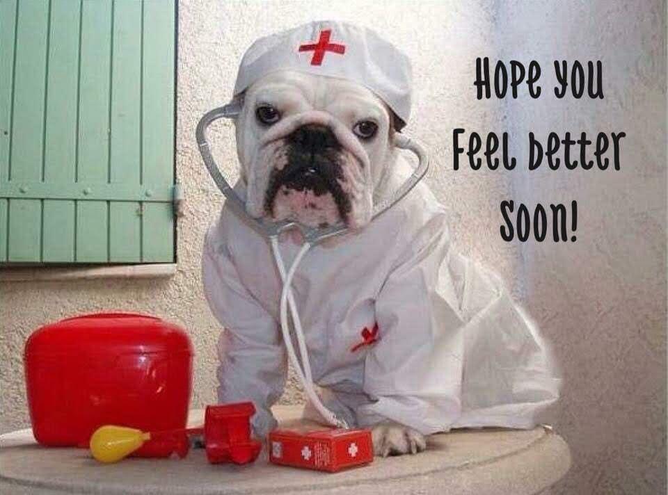 Bulldog Nurse1.jpg