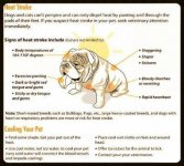 Bulldogs and heat stroke.jpg
