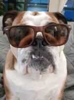 Jackson sunglasses.jpg