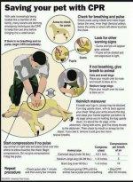 Doggie first aid.jpg