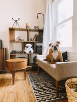 Living Room with Ibsen.JPG