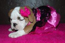 Lola first year 101.jpg